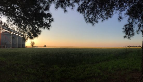 ラパスの農場